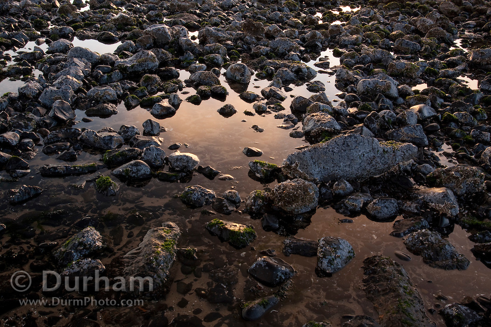 Sunset clouds are reflected among the  tidepools created by basalt rocks at low tide along the base of Haystack Rock. Near Cannon Beach, Oregon Coast.