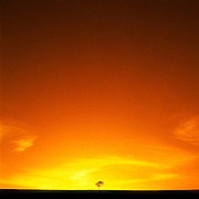 Lone Tree, Muswellbrook, Hunter Valley, Australia