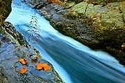 Autumn leaves on wet rocks over a rushing river, Great Falls Park, Virginia