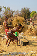 Wheat harvesting Separating the chaff from the straw. Photographed in Madagascar