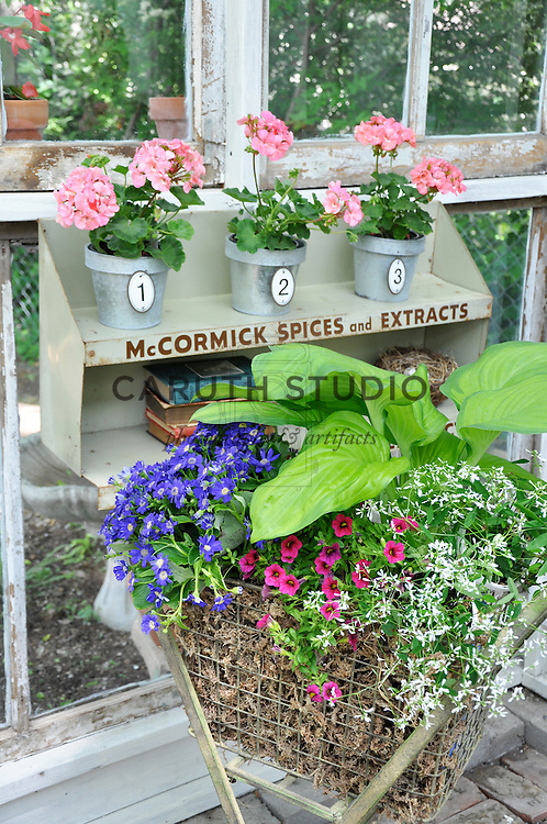 Vintage garden: Old laundry cart and spice shelf filled with flowering plants and collectibles inside glass shed