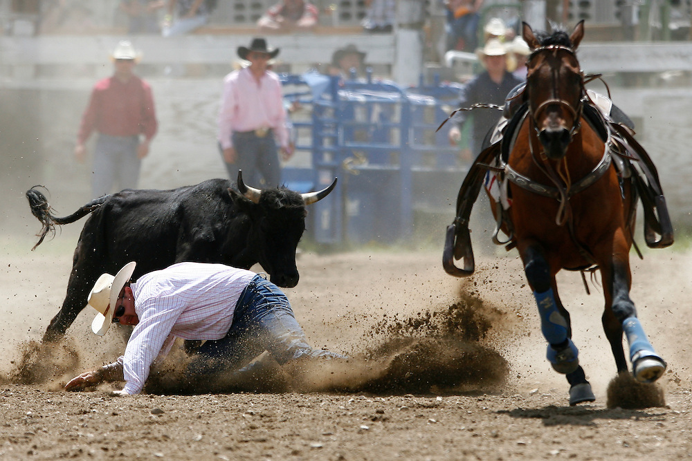 061811-Evergreen, COLORADO-evergreenrodeo-Justin Barhite, of Penrose, CO, loses his grip and tumbles into the dirt while trying to wrestle a steer during the Evergreen Rodeo Saturday, June 18, 2011 at the El Pinal Rodeo Grounds..Photo By Matthew Jonas/Evergreen Newspapers/Photo Editor