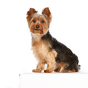 20120326 Small Dogs/Karen