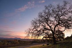 Sunrise at Arista winery