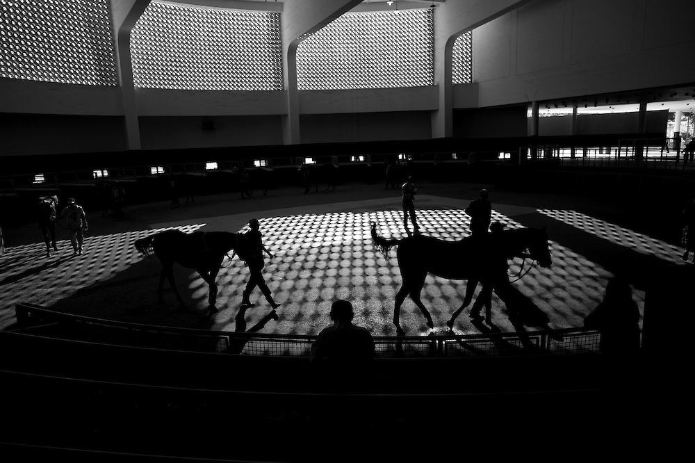 In this photo taken Dec. 5, 2010, horses walk before competing in the Caribbean Classic Series at the Rinconada racetrack in Caracas, Venezuela. On weekends the Rinconada the oldest and large racetracks in Venezuela gather thousands of fans from poor, middle class professionals and the well to do, where in only few minutes remain before whistle blows, jockeys guide their thoroughbreds toward the starting gate, gamblers place their final bets and cheers erupt from the crowd at the racetrack. In this baseball crazed South American nation, horse racing is second only to championship games headlined by major league sluggers.