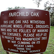 The Fairchild oak tree along the Ormond Beach Loop in Ormond Beach, Florida. (AP Photo/Alex Menendez) Florida scenic highway photos from the State of Florida. Florida scenic images of the Sunshine State.