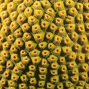Healthy Coral head,