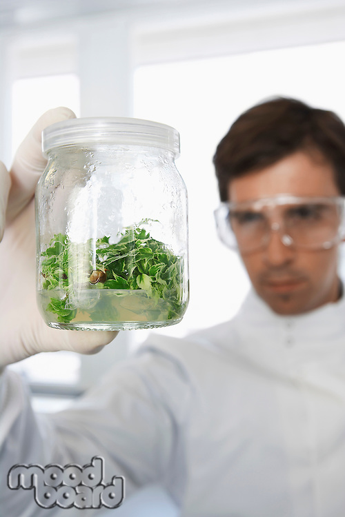 Male lab worker examining glass jar of plant material