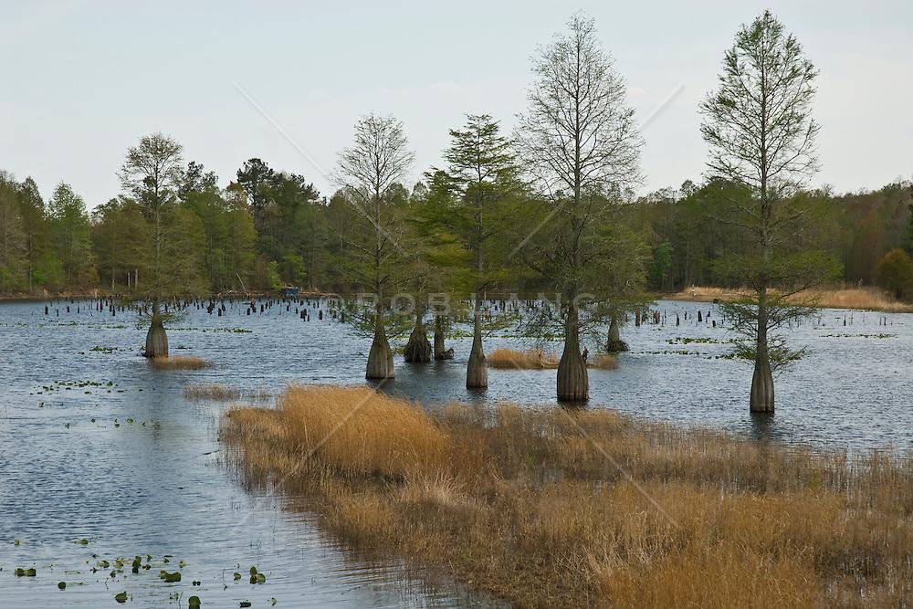 Lake in South Carolina