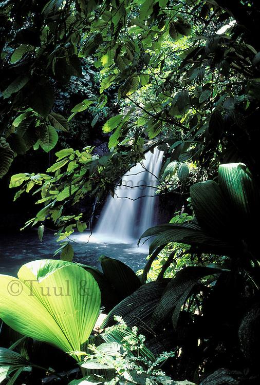 Waterfall Saut de la Lezarde - Martinique (French département d'outre Mer - DOM) - France<br /> French West Indie - Antilles françaises<br /> Caribbean