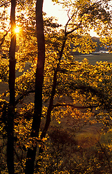Yarmouth, ME. The sun shines through oak trees on the edge of a salt marsh near the Royal River.   TPL project.