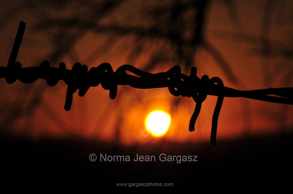 Barbed wire defines ranch lands at sunset in Sahuarita, Arizona, USA.