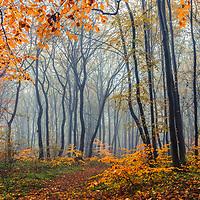 Shumen Plateau In Autumn
