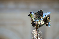 A metalwork dove atop the nativity scene in the Zocalo, Oaxaca, Mexico.