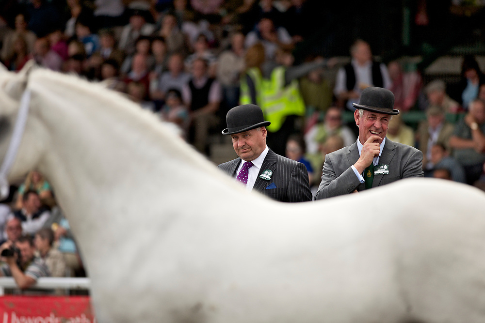 Horse judging at the Royal Welsh Agricultural Show in Builth Wells, Wales, UK. <br /> <br /> Judges can be seen carefully inspecting the horses, looking for the details of breeding that can make the animals better suited for their economic tasks. Generations of farmers (and judges) have been looking carefully for these traits for hundreds of years in order to make the animals more productive.<br /> <br /> The Royal Welsh Agricultural Show is one of the largest shows in in the UK, and showcasing the great agricultural tradition of Wales.  <br /> <br /> Contacts: <br /> Richard Broad<br /> Rare Breeds Survival Trust<br />  Stoneleigh Park, Nr. Kenilworth,  Warwickshire<br /> UK     DCV8 2LG<br /> Phone:  01834 860886<br /> 07772 007399<br /> Email: r.broad@rbst.org.uk<br /> <br /> Sally Renshaw<br /> Rare Breeds Survival Trust<br /> Phone:  +44 024 7669 6551<br /> +44 (0)2476 698764<br /> Email: sally@rbst.org.uk