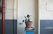 a kind of poor house plant in a industrial buildings hallway