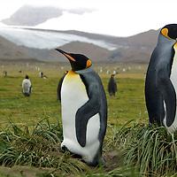Penguin Friends