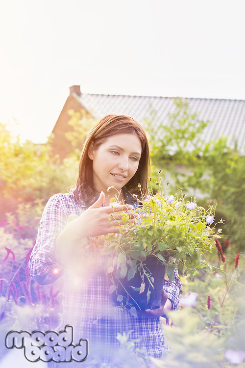 Portrait of mature female buyer checking flowers on pot in shop