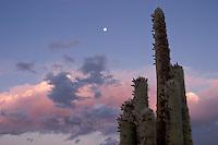CARDON (Trichocereus pasacana) Y LUNA LLENA, QUEBRADA DE HUMAHUACA, PROV. DE JUJUY, ARGENTINA