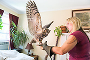 "Wendy Pavlicek at her home in Billerica, MA with her dog, cat, great horned owl and barred owl.  (names of birds needed)  As opposed to being hunting/falconing birds, both of the owls are 'imprints"" due to being rescue birds - they have grown up with human contact and therefore will be educational birds for their life spans, and not released back into the wild."