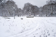 Winter in Central Park  at Cherry Hill