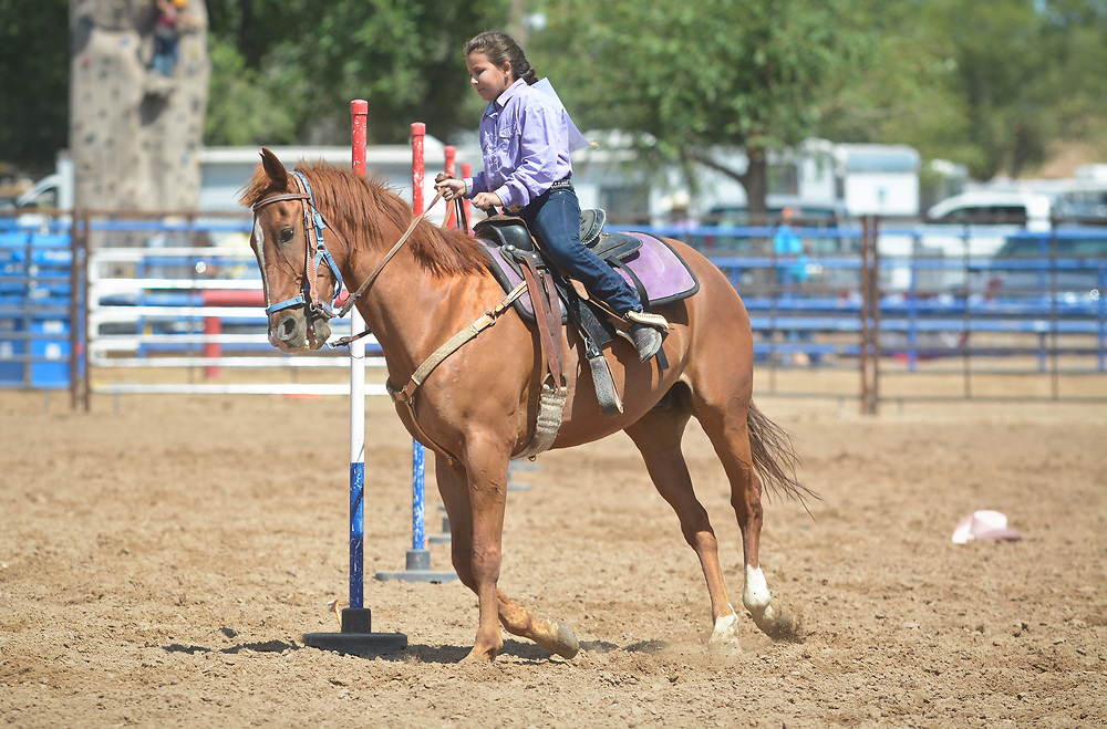 BernCo Bernie Sheep Day and First Impression Youth Rodeo, Saturday, August 5, 2017, at Bernalillo County's Dennison Park Rodeo Grounds in the South Valley (Marla Brose/Albuquerque Journal)