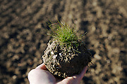 soil with some grass hold in a hand against the background of a plowed field