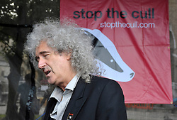 © Licensed to London News Pictures. 11/09/2012. Bristol, UK. Picture of Brian May at a Rally against badger culling on Bristol's College Green.  A court today rejected an appeal by campaigners to stop badger culling to try and control turberculosis in cows.  11 September 2012..Photo credit : Simon Chapman/LNP