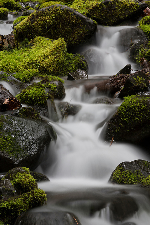 Olympic National Park consists of areas of temperate rain forest.  You can find many streams with moss covered rocks along the trails.