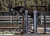 Horse No 16