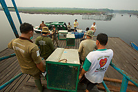 Three wild orangutans which were rescued by the Borneo Orangutan Survival Foundation (BOS) from burned out areas are being translocated to Sebangau National Park by boat.  They have been brought from the BOS holding center where they have been for several days, and are now being transfered to a boat for travel to the park.<br />