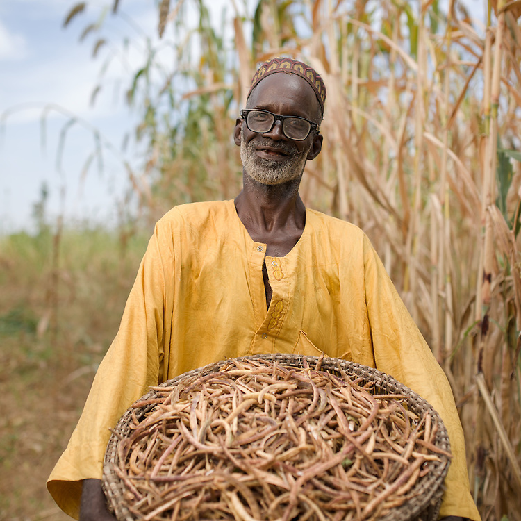 Bagui Traue with the harvest of ground peas (?) that he grows by intercropping with his sorghum, seen towering above him. Intercropping allows the farmer to get double crops from the land. Additionally he may plant the same field several times a year.