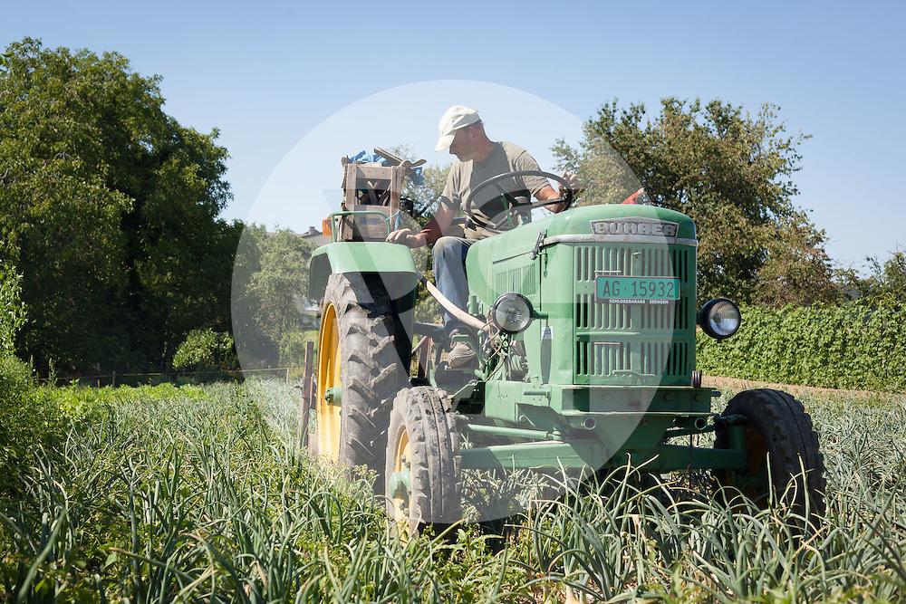 SCHWEIZ - MEISTERSCHWANDEN - Ein Bauer lockert mit einer Maschine die Zwiebeln für die Ernte - 16. Juli 2014 © Raphael Hünerfauth - http://huenerfauth.ch