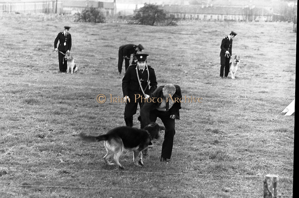 New Garda Dogs.   (N2)..1979..22.11.1979..11.22.1979..22nd November 1979..Today saw the passing out of four new Garda Dogs for the Garda Canine unit.The event was held at the Royal Hospital, Kilmainham..Image shows Garda Rover apprehending a Villain on the lawns of the Royal Hospital his handler Garda Culkin closes in to make the arrest.