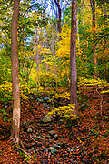 A riot of fall color along the Mill Race Trail in Oella, Maryland.
