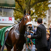Echiquier Royal (J. Ricou) wins Prix Congress, Steeple-Chase Gr.2, Auteuil, France 04/11/2017, photo: Zuzanna Lupa