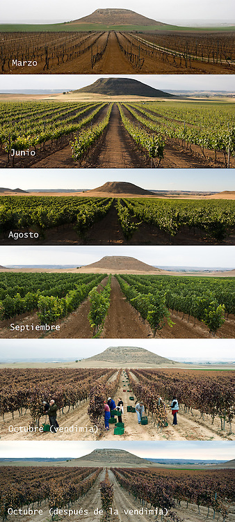 Fields evolution from March to October in Ribera del Duero (Spain)<br /> <br /> Evoluci&oacute;n del campo en Ribera del Duero, desde marzo a octubre.
