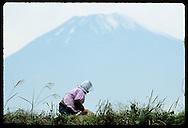 Woman in bonnet weeds her farm field beneath towering peak of Mt Fuji on October morn; Gotemba Japan