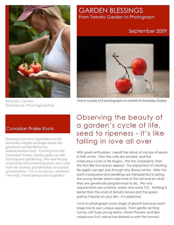 tomato series, tomato, tomatoes, garden blessings, tomato photographs, tomato art, tomato images, Shelley Lipton
