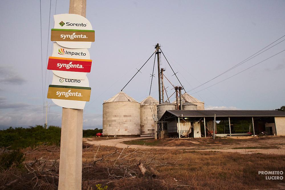 Los  cultivos de soya transgénico se concentran en xilos. (FOTO: Prometeo Lucero)