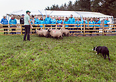 Failte Ireland - Atlantic Sheepdogs