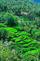 Rice Terraces, Sayan (near Ubud), Bali, Indonesia