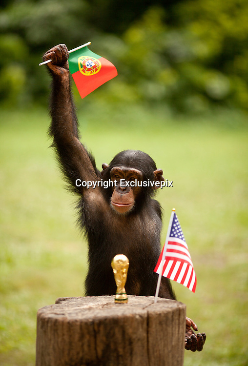 GUANGZHOU, CHINA - JUNE 22: (CHINA OUT) <br /> <br /> Animals Play Football<br /> <br /> An elephant plays football against a black bear at a zoo and  receives a trophy from an orangutan after a football match against black bear <br /> &copy;Exclusivepix