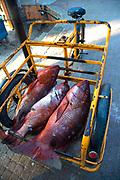 Red snapper, El Andador del Pescador, Fishermans Walk,  Zihuataneo, Guerrero, Mexico