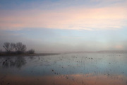 A misty sunrise at the flight deck pond at Bosque del Apache National Wildlife Refuge,New Mexico