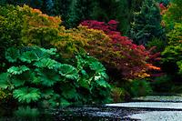 The start of autumn's colors at Van Dusen Botanical Garden.