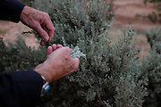 Sage Brush. Exploring the vast landscapes of Northern New Mexico's Historic Ghost Ranch.