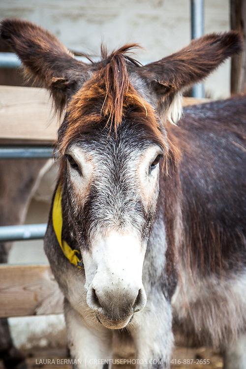 At the Primrose Donkey Sanctuary, Roseneath, Ontario