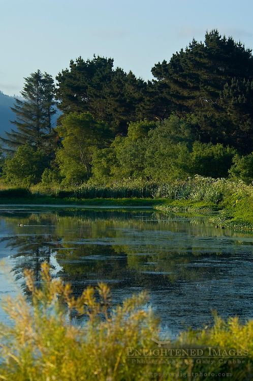 Morning Light at the Arcata Marsh, Arcata, California