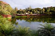 Brumadinho_MG, Brasil...Jardim Botanico no Centro de Arte Contemporanea Inhotim (CACI) Brumadinho, Minas Gerais...The Botanical garden in the Inhotim Contemporary art Center (CACI), Brumadinho, Minas Gerais...Foto: NIDIN SANCHES / NITRO